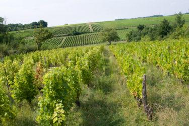 Loire Wine Tour with La Cucina di Terresa