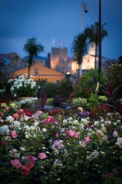 IMAGE: View overlooking the flower fields of Grasse