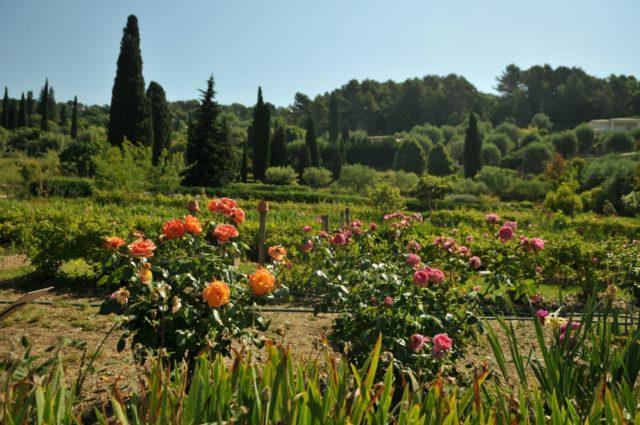 IMAGE: The gardens of the Musée International de la Parfumerie in Grasse