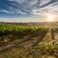 A brief introduction to Gascony